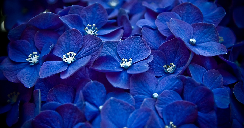blue flowers and flowering plants