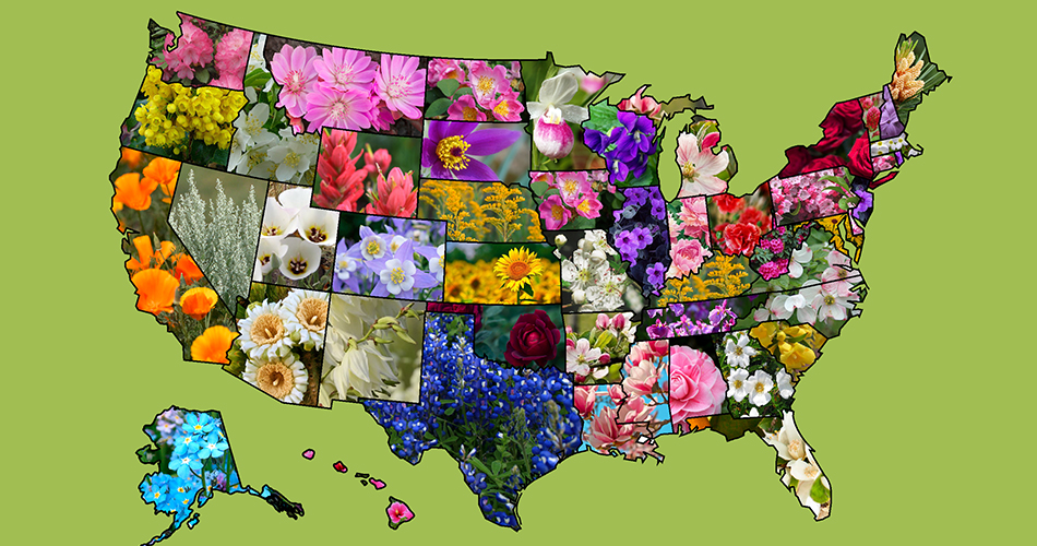 us state flowers